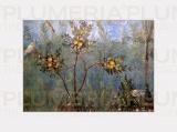 Reprodukce obrazu Garden Fresco Villa di Livia